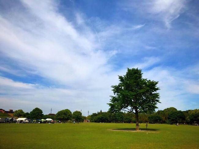 Tree Sky Oita Oita-prefecture Oita,japan Park