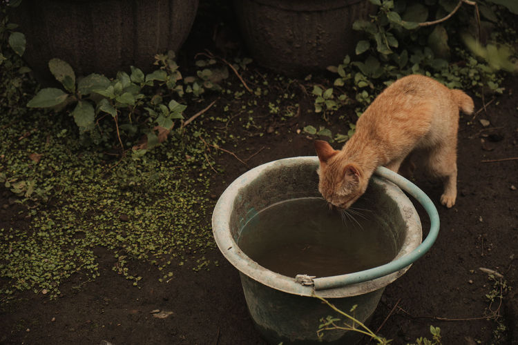 High angle view of cat drinking from potted plant