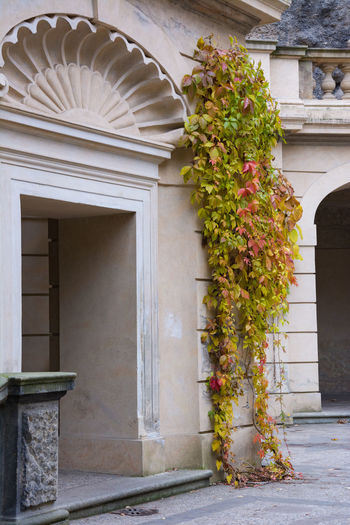 Architecture Autumn Autumn Colors Building Exterior Built Structure Close-up Czech Republic Day Door Entrance Façade Grebovka Havlickovy Sady House Nature No People Outdoors Park Prague Residential Building Tree Vertical
