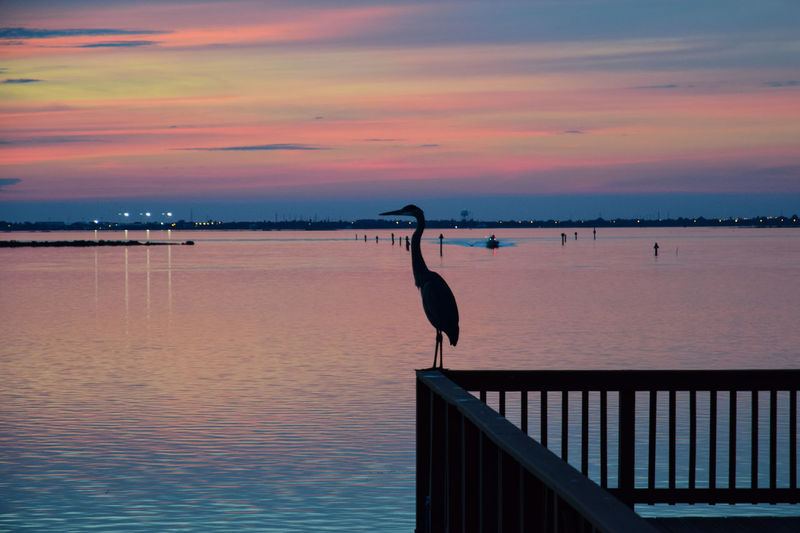 Silhouette heron perching on railing by sea during sunset