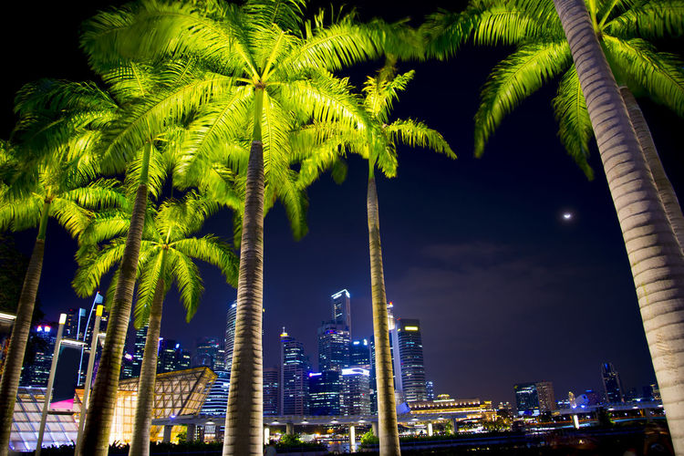 Palms in Marina Bay Singapore City Palms Palm Tree Marina Bay Night Illuminated