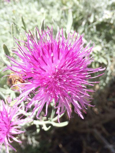 Prickly purple plant or flower? Flowers Are Blooming EyeEm Nature Lover San Francisco Botanical Garden Botanical Gardens Flowers,Plants & Garden Plants 🌱 Flowers