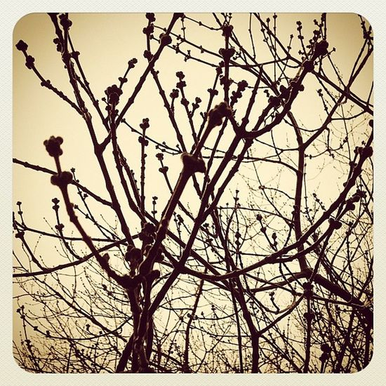 Branches. I like them. Ilovebaretrees Instagood Nature Instanature Sky Earlybirding Trees Earlybirdlove Tree Picframe Winter Igcentric_nature Silhouette Treeveins Natural Insta4eb Branches Ilovetrees Contrast Snapseed Instamood BareTrees Earlybird