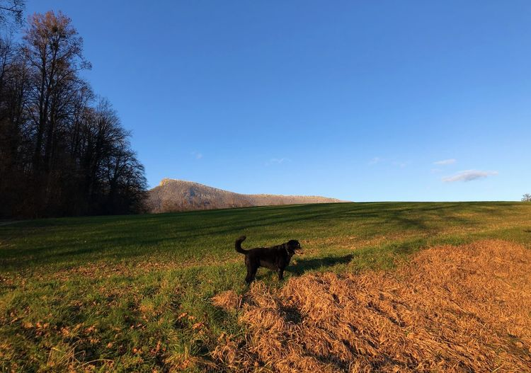 View of dog on field against sky
