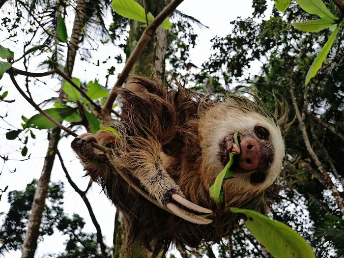 Low angle view of sloth on tree