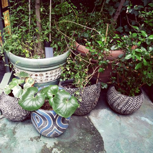 Milan. A city of hidden courtyards 🍃☘🌿🍃🍀 Gardening In The City Still Life Nature On Your Doorstep Autumn Collection Mix Yourself A Good Time From My Point Of View EyeEm Gallery The Week On EyeEm Walking Around Taking Pictures Better Look Twice Lifestyle Photography Walking Around Focus On Details Calm And Serene My Year My View Gardening Still Potted Plant Courtyards Street Photography Streetphotographer Enjoy The New Normal Wanderlust Italia Plantproblem