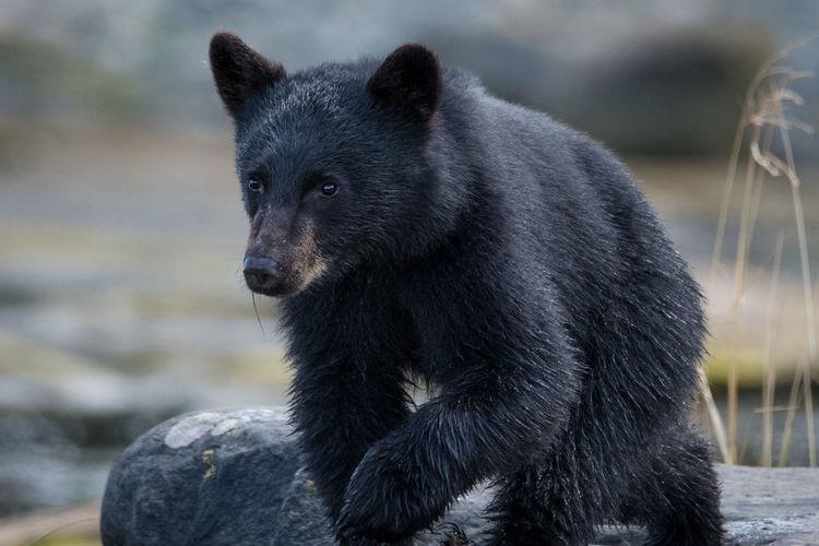 Close-up of black animal
