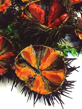 Eriçons gallecs vius. Erizos gallegos vivos Toni Gordillo Elhogargallego Calella Maresme Barcelona Gastronomy Spanish Food Food Mediterranean Food Restaurant Fish