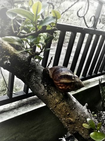 Snail🐌 alone in my room Indonesia_photography First Eyeem Photo Belajarphotography INDONESIA Sukabumi