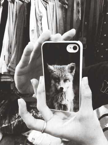 Newcase  Fox