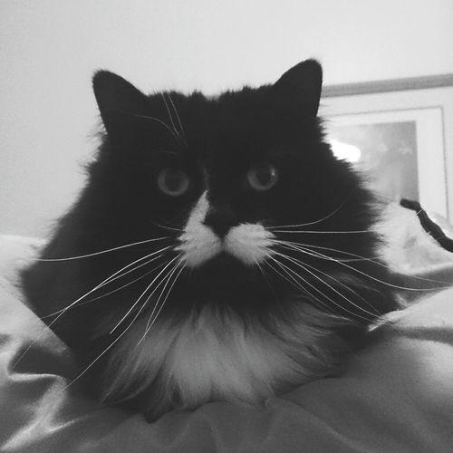 Cat First Eyeem