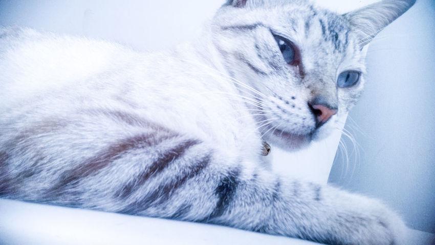 Cat chat Gata ♡ Gata🐱 Gatas Top GataLinda CATTY catphotography EyeEmNewHere Millennial Pink
