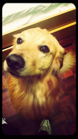Amigo Cachorro Hi! First Eyeem Photo
