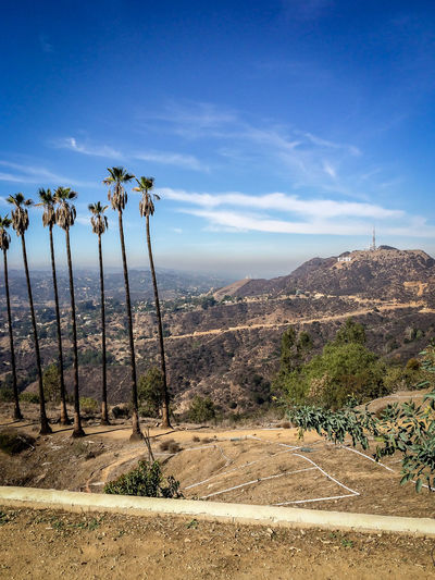 Griffith Observatory Landscape Los Angeles, California Mountain Palm Tree Sky Sky And Clouds Trees Wide Shot