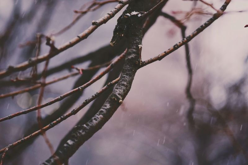 Close-up of frozen branch