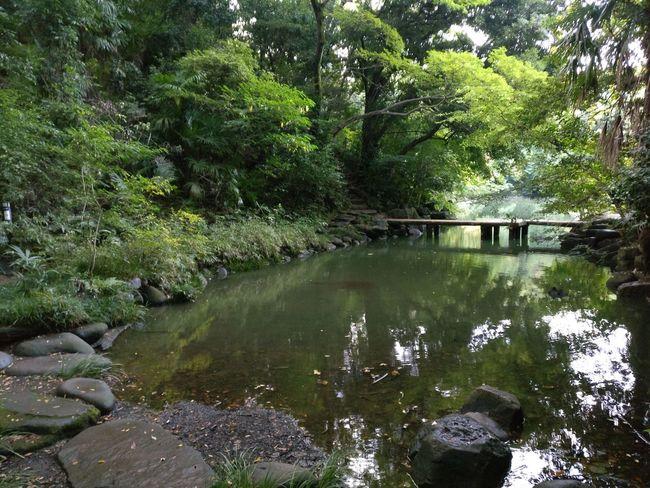 Sanshiro pond at the University of Tokyo. Beauty In Nature Green Color Japan Lake Sanshiro Pond Tokyo Tourist Tranquility University Of Tokyo