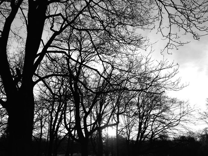 I hear her voice Calling my name The sound is deep In the dark I hear her voice And start to run Into the trees Into the trees ... 🏃🏻 The Cure Tadaa Community Falcons View Fortheloveofblackandwhite EyeEm Best Shots-Trees- TreePorn TreePorn Black And White IPhoneography Mpro Structure Blackandwhite EyeEm Nature Lover From My Point Of View It's Cold Outside