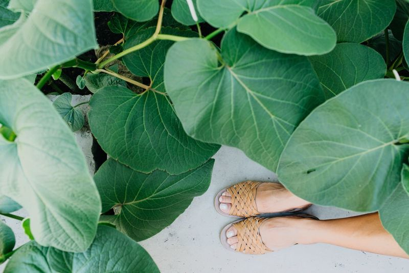 High angle view of person on leaves