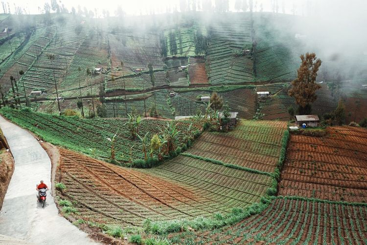the mist is down Working Rural Scene Agriculture Tree Men Field Farm Sky Combine Harvester Terraced Field Agricultural Equipment Agricultural Machinery Rice Paddy Plantation Rice - Cereal Plant Agricultural Field Harvesting It's About The Journey