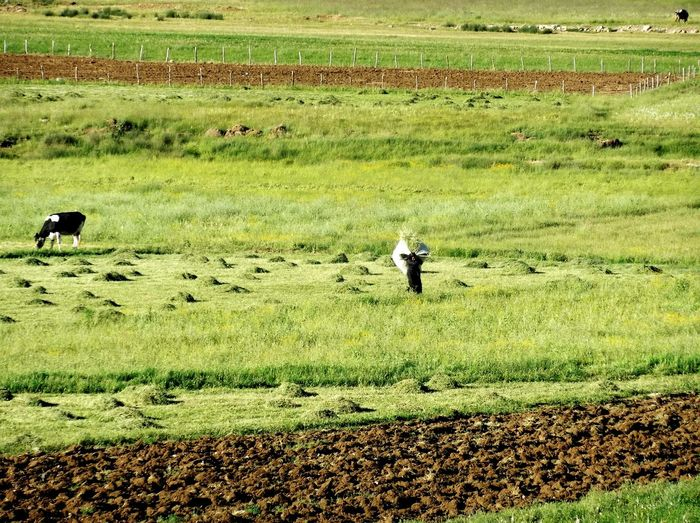 Lifestyle Koohrang Shahrekord Agriculture Farm Field Green Color Farmer Working Real People Landscape Outdoors Day Grass Beauty Nature Irantravel Travel Destinations Iran♥ Iran Tours Lonelyplanet Beautiful ♥ Shirdal Airya Tour Persia Iran Travel
