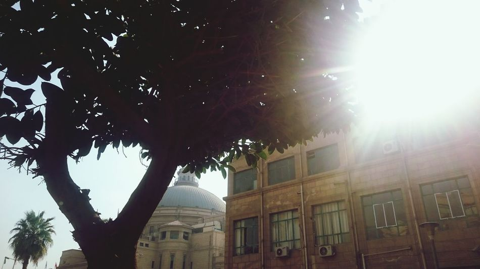 Sky Sunlight Architecture No People Outdoors Built Structure Cairo University Tree Sunlight Nature El2oba Mobilphotograpy