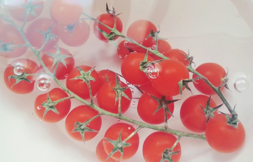 Underwater Photography Tomatoes Red Vegeterian Vegetable Fresh
