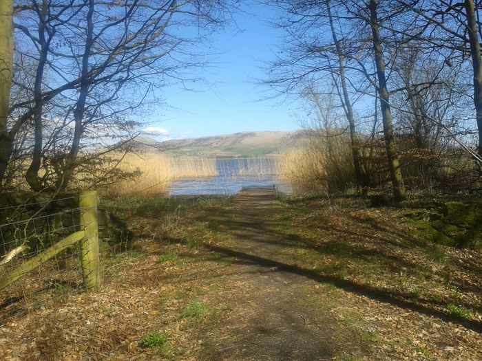 Loch Leven Bare Tree Day Grass Nature No People Outdoors Sky Tranquility Tree Scotland Loch  Shadow Reeds Fence