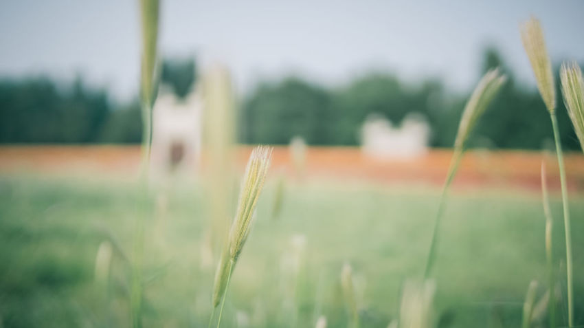 Beauty In Nature Beijing China Culture Documentary Field Growth Nature No People Old Buildings Shantou Traveling