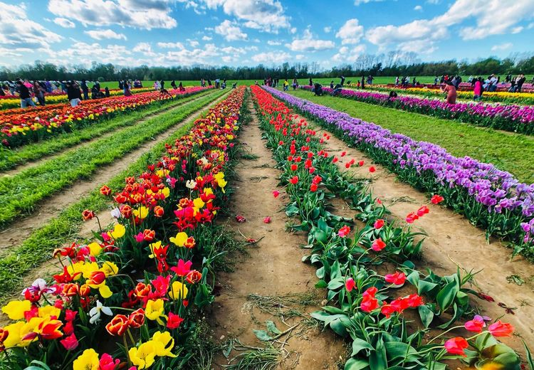 Multi colored flowering plants on field