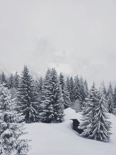Wanderlust Snow