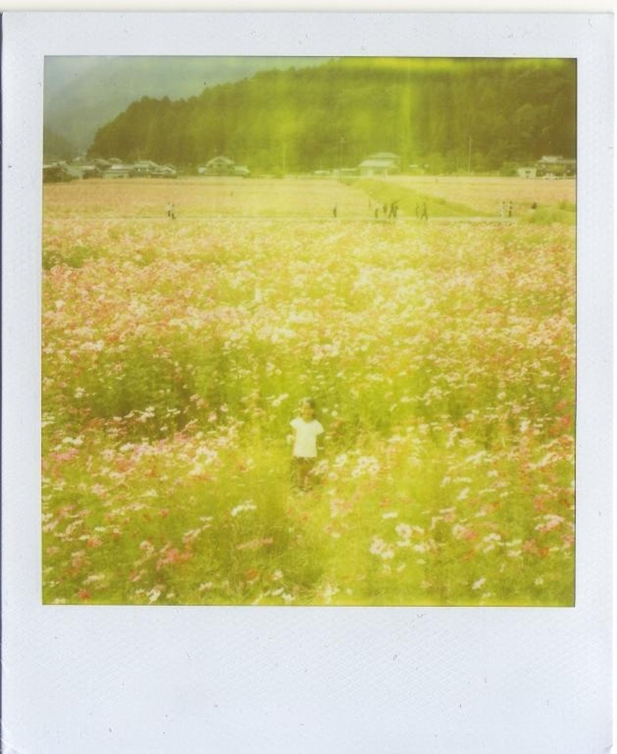 transfer print, auto post production filter, field, growth, beauty in nature, grass, nature, tranquility, plant, tranquil scene, flower, green color, landscape, scenics, outdoors, day, meadow, grassy, no people, frame