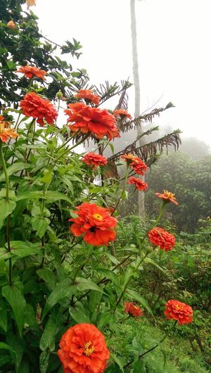 Red flowers on a foggy morning!! Flowers Htc One M8 Photography, Originalclick
