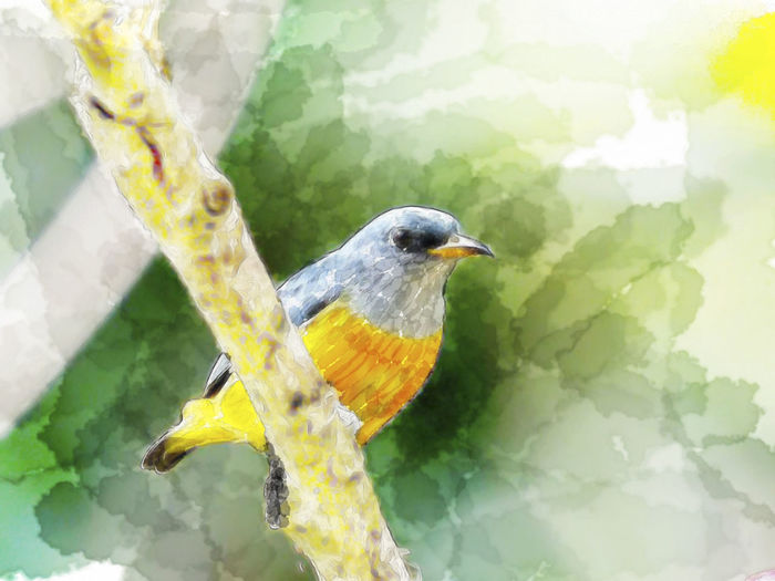 Animal Animal Themes Animal Wildlife Animals In The Wild Beak Beauty In Nature Bird Branch Close-up Day Full Length Nature No People One Animal Outdoors Perching Plant Tree Vertebrate Water Color Painting Yellow