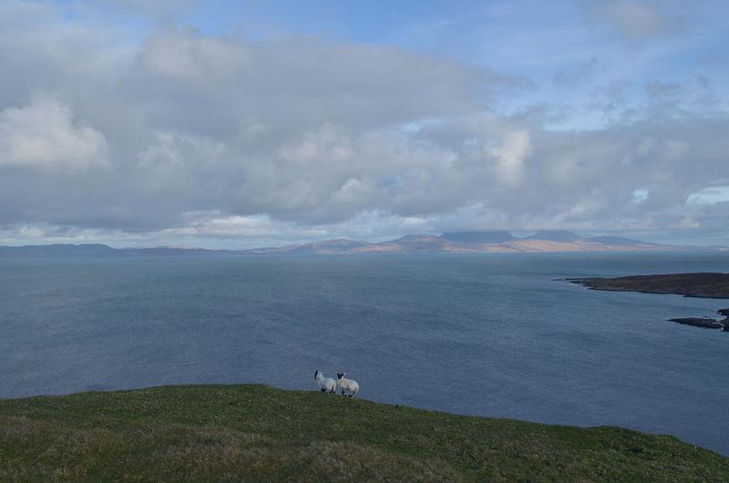 Beauty In Nature Calm Edge Of The World Farm Farm Life Isolated Lambs Landscape On The Edge Precarious Scotland Seascape Two