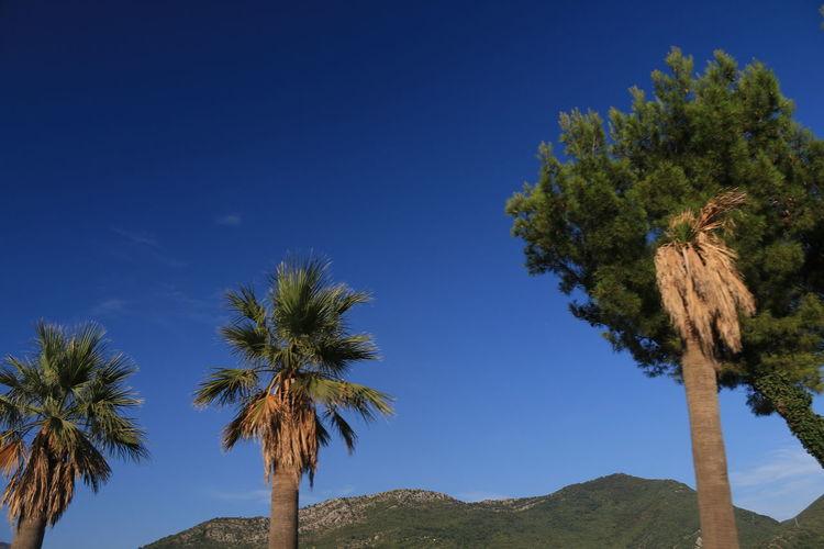 Summer sky Summer Bluesky The Purist (no Edit, No Filter) No Edit/no Filter Palm Tree Stock Image Date Palm Tree Coconut Palm Tree Palm Leaf Grove Pine Tree Date Pine Cone Coconut