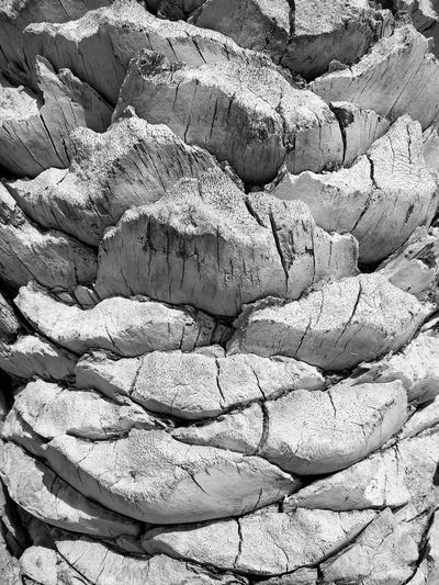Textures Natural Texture Tropical Abstract Minimalism Sunny Nature Bw Blackandwhite Black And White Black And White Nature Texture Textures In Nature Palm Tree Palm Trunk Trunk Texture Natural Pattern Backgrounds Textured  Sunlight Pattern Close-up Abstract Backgrounds