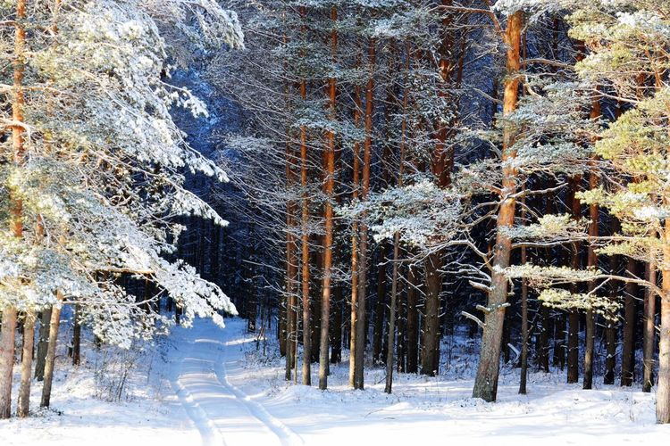 Winter Snow Cold Temperature Nature Tree Outdoors Beauty In Nature No People Day