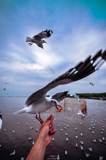 Flying Human Hand Animal Themes Animal Vertebrate Animal Wildlife Water Hand Bird Spread Wings Animals In The Wild Human Body Part Motion One Person Mid-air Real People Unrecognizable Person Nature Group Of Animals Feeding  Body Part Finger Seagull Outdoors