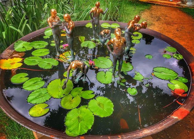 Metalwork Growth Flower Plant Water High Angle View Leaf Green Color Water Lily Outdoors Floating On Water Lily Pad