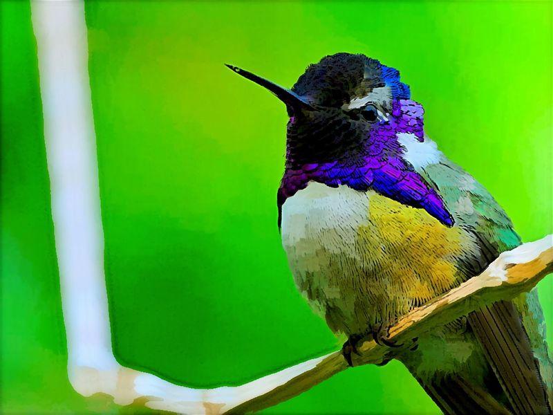 Humingbird Bird Animals In The Wild Animal Themes One Animal Perching Nature Day