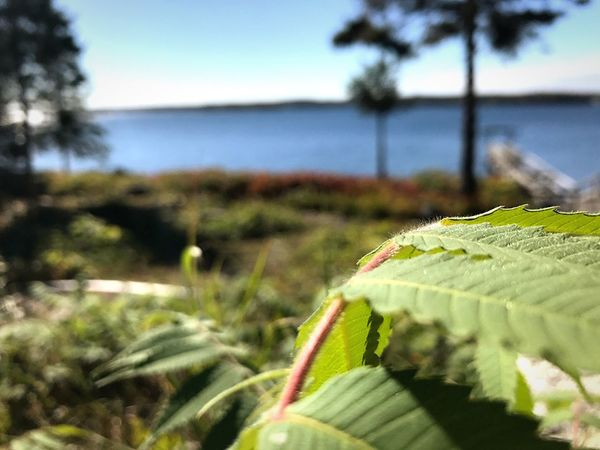 Dramatic Angles Growth Plant Water Beauty In Nature Green Color Boothbay Harbor Maine Focus On Foreground Tranquility Freshness Fragility Nature Sea Boothbay Harbor United States From The View Of A Leaf By Moonside