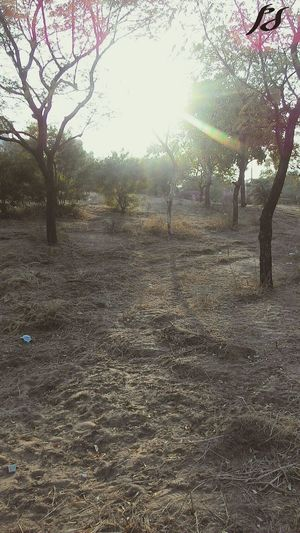 Eyem Photo Sunset Forest Evening Sunrays Trees Shining Check This Out Phone Photography Studio. Phone Photography