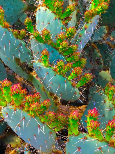 Growth Nature Leaf Plant Beauty In Nature No People Cactus Outdoors Day Close-up Freshness Water EyeEm Gallery EyeEmNewHere Check This Out Cactus