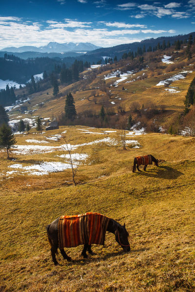 Horses covered in blankets in a cold spring morning from Brasov, Romania. Farm Field Hills Nature Rural Animal Beauty Beauty In Nature Blanket Blue Sky Brown Clouds Cold Domestic Animals Horse Landscape Mammal Mountain No People Outdoor Snow Spring Two Animals