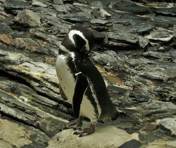 Things I Like Lisbon Portugal Oceanographic Penguin Nature Sea Life Visiting Traveling