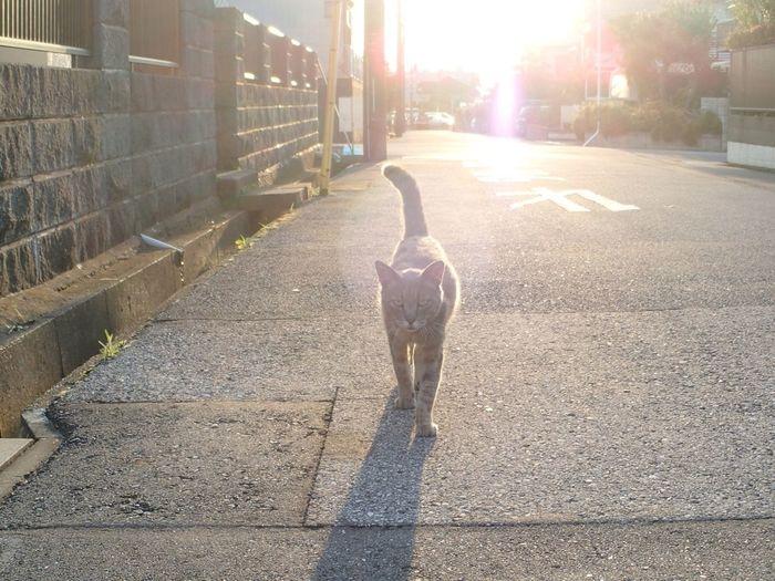 A Brave Stray Cat