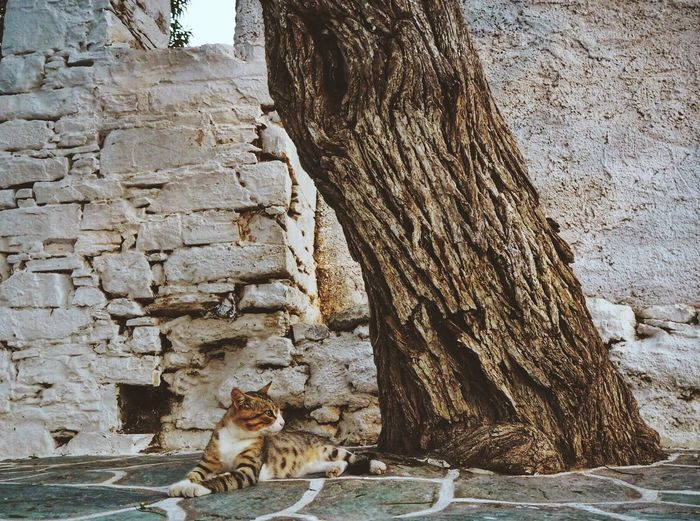 Blending in Cat No People Architecture Day Built Structure Wall - Building Feature Nature Tree Wall Textured  Tree Trunk Trunk Solid Outdoors Building Exterior Sunlight Pattern Plant Old Rock - Object Rock