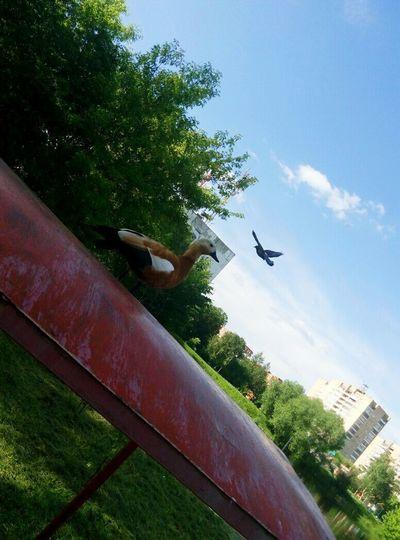 Duck Dove Red Enjoying Life Animals Taking Photos Tumblr Hello World Summer Green Forest Sunny Katya_1lee