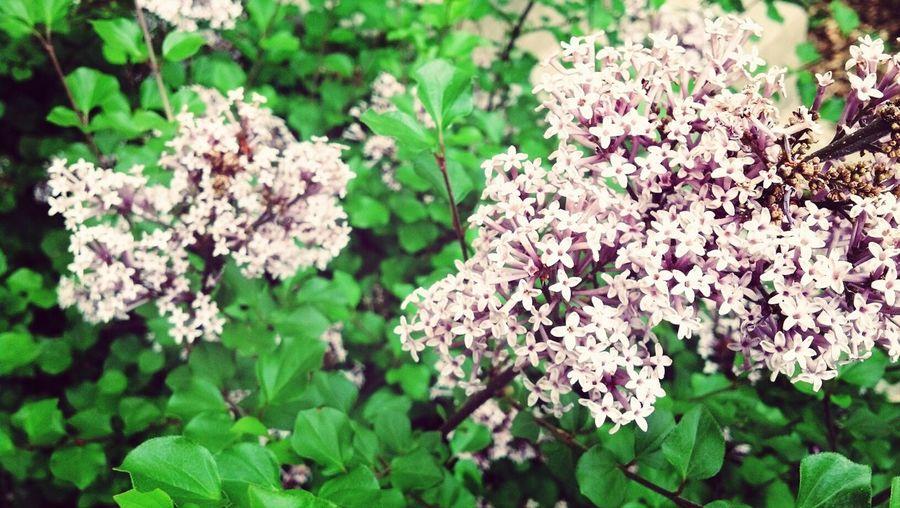 Flowersss~ Flowers Beautiful