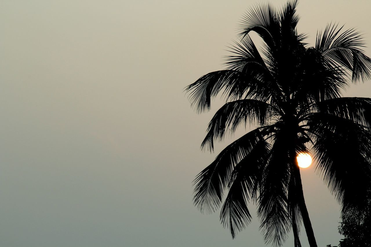 palm tree, low angle view, tree, sky, clear sky, beauty in nature, palm frond, scenics, outdoors, nature, no people, tranquil scene, silhouette, tree trunk, tranquility, night, sunset, illuminated, growth